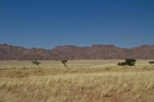 Koiimasis-DesertHomestead-2