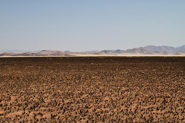 Koiimasis-DesertHomestead-3
