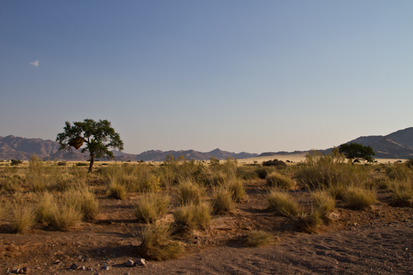 Koiimasis-DesertHomestead-6