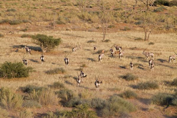 Sossusvlei-Swakopmund-8