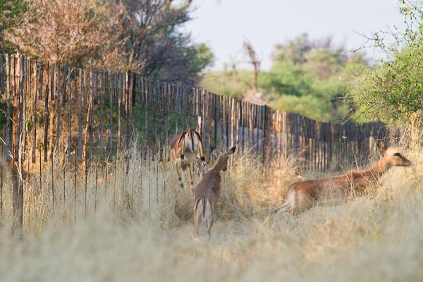Swakopmund-Onduruquea-7