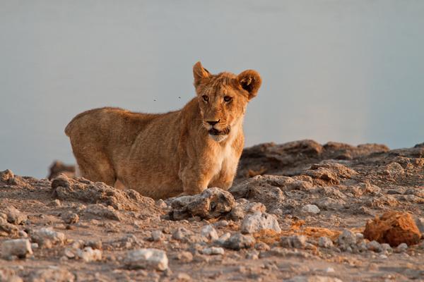 Namibia Etosha Nationalpark